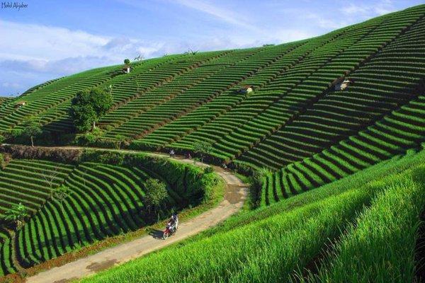 Singgah di Terasering Panyaweuyan untuk Nikmati Pesona Majalengka