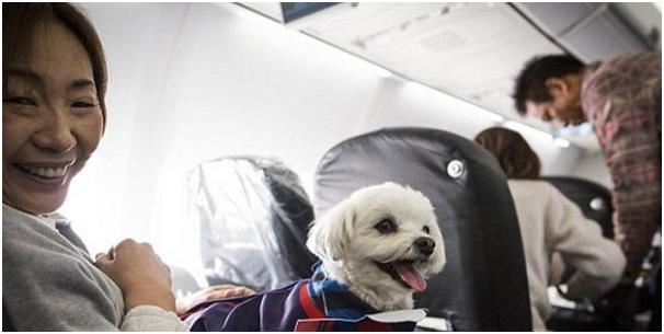 Maskapai Ini Tawarkan Paket Penerbangan Dengan Hewan Kesayangan Anda