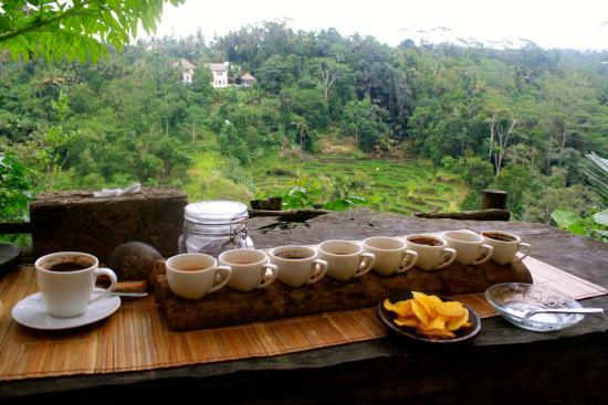 Ayo Mencicipi 8 Jenis Kopi di Bali Pulina Agro Wisata