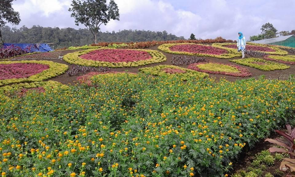Sangat Cantik Pesona Taman Bunga di Jambi ini !