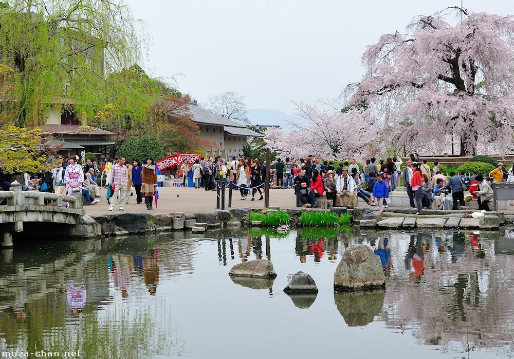5 Tips Untuk Melihat Sakura yang Cantik di Kyoto !