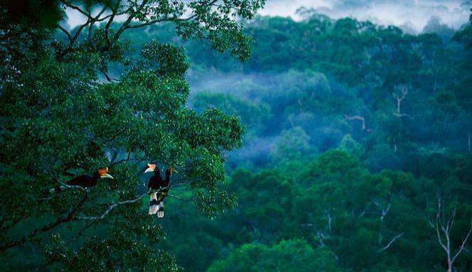Tips Menyenangkan Berwisata di Hutan Kalimantan