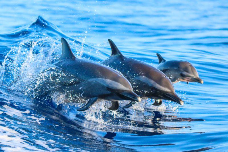 Yuk Lihat Lucunya Lumba-lumba di Pulau Mare, Tidore!