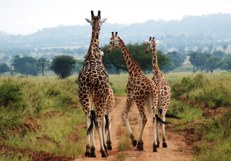Taman Safari Terbaik di Afrika