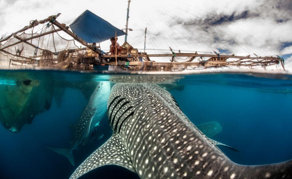 Pecinta Diving Harus Rasakan Taman Nasional Teluk Cendrawasih Papua