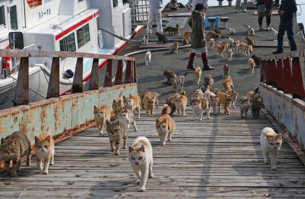 Jalan-jalan ke Jepang, Jangan Lupa Singgah ke Pulau Kucing