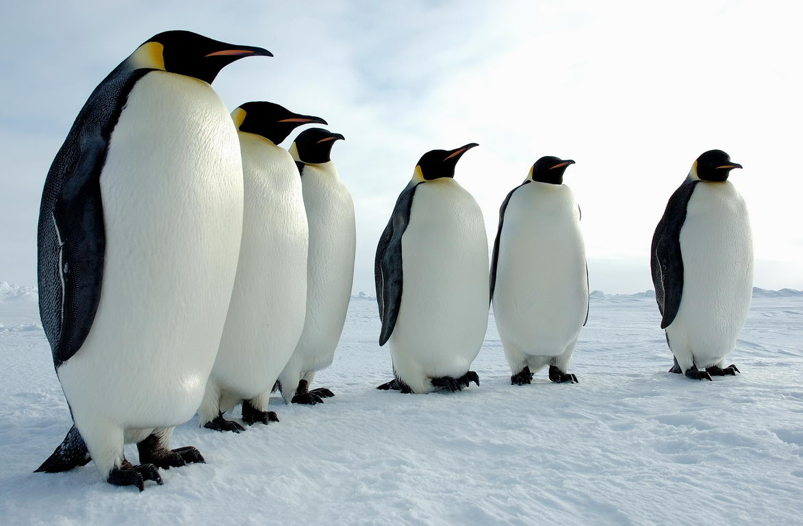 3 Tempat Terbaik Untuk Melihat Si Penguin Menggemaskan