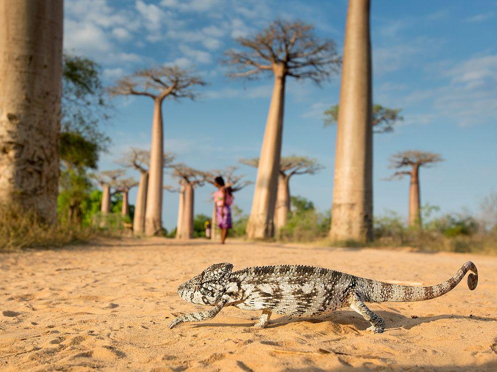 Tips Aman Selama Holiday di Madagaskar