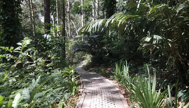 Pesona Cantik Wisata Alam di Taman Hutan Raya Sultan Syarif Hasyim Riau