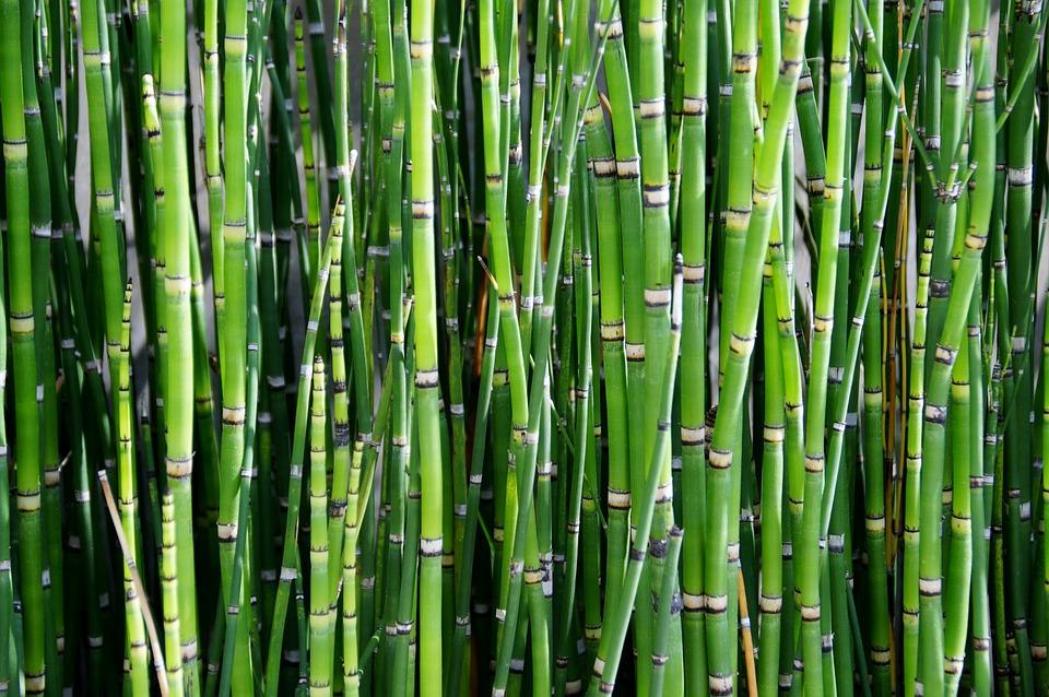 Jangan Remehkan Bambu, Karena Bisa Jadi Alarm Terjadinya Erupsi Gunung Berapi !