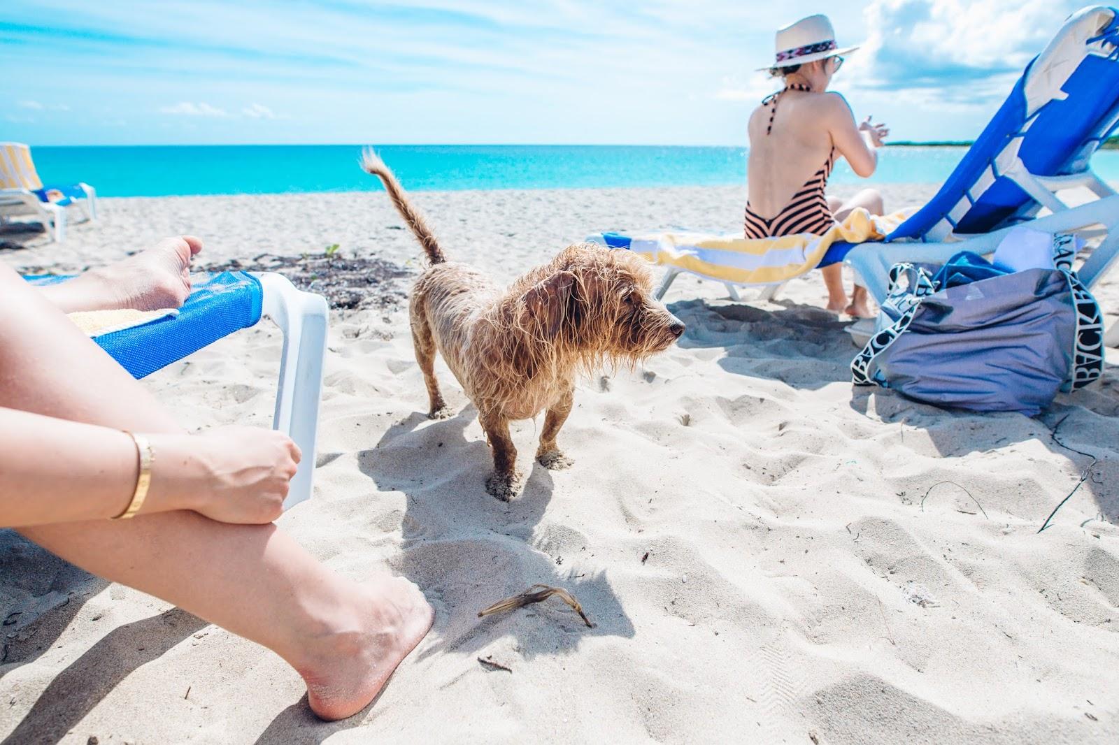 Pantai Karibia, Destinasi Wisata yang Tepat untuk Traveler Pecinta Anjing