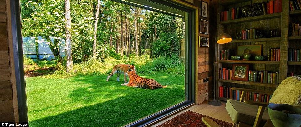 Hotel Ini Berikan Sensasi Nginap Dengan Harimau