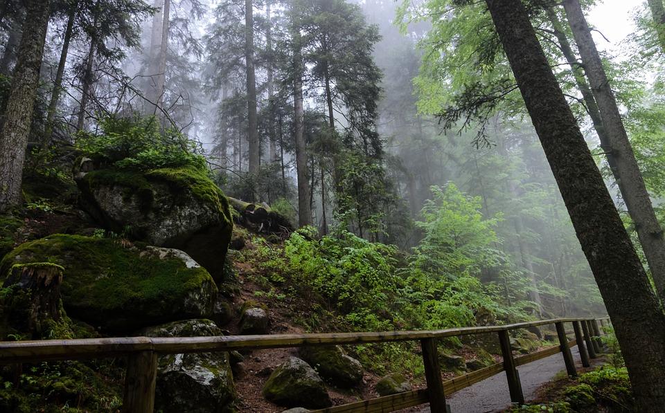 Hutan Indah Penuh Misteri Bikin Wisatawan Penasaran, Black Forest Namanya!