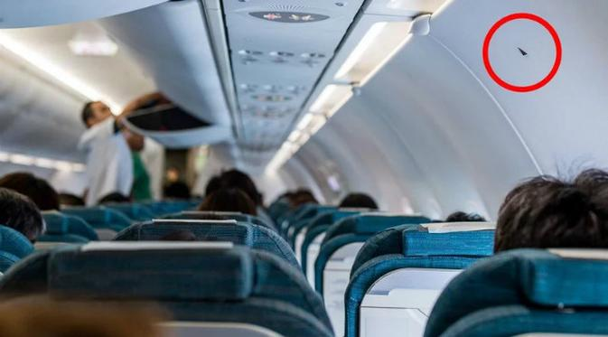 Deretan Fasilitas Rahasia Dalam Pesawat Terbang