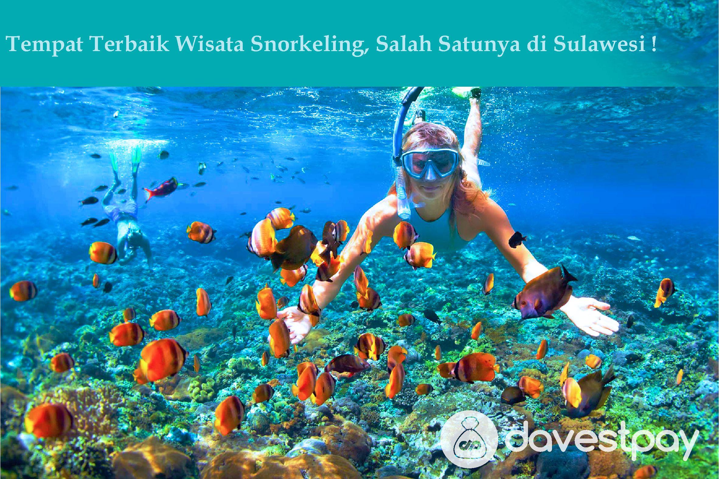 Tempat Terbaik Wisata Snorkling, Salah Satunya di Sulawesi !